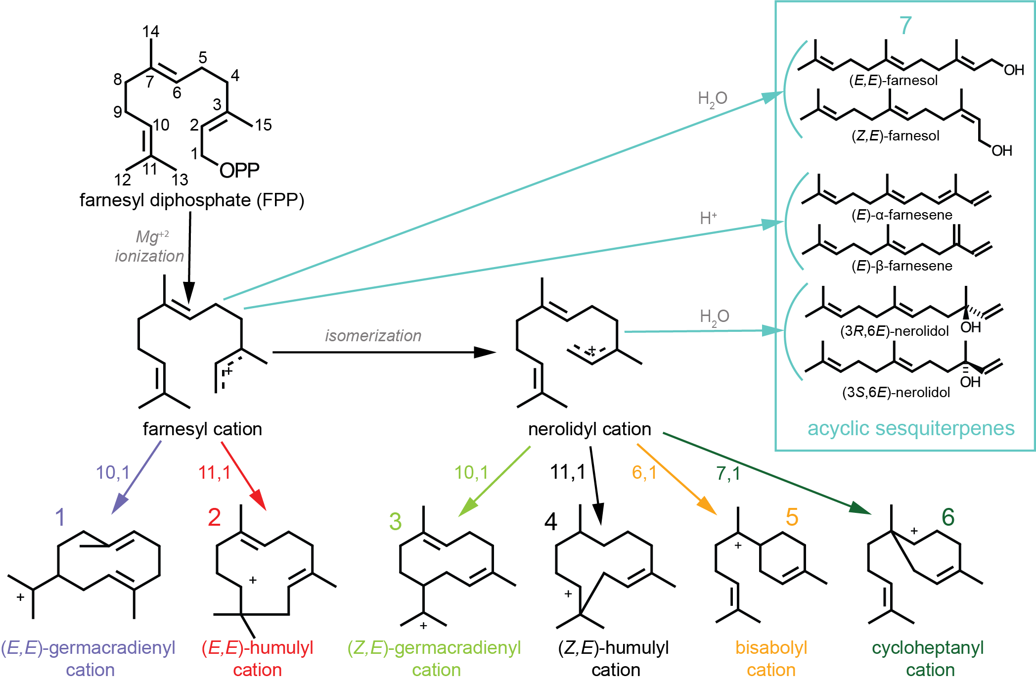 Characterized Plant Sesquiterpene Synthases on group 2 metals, group 2 flow chart, group 2 minerals, group 2 elements,